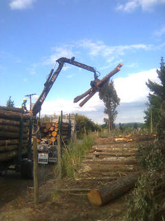Logging out timber for export