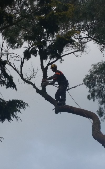 Tree pruning Ace Tree Recycling Ltd